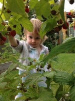 raspberry summers