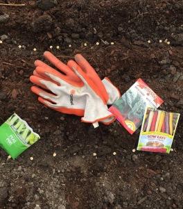 seeds in garden
